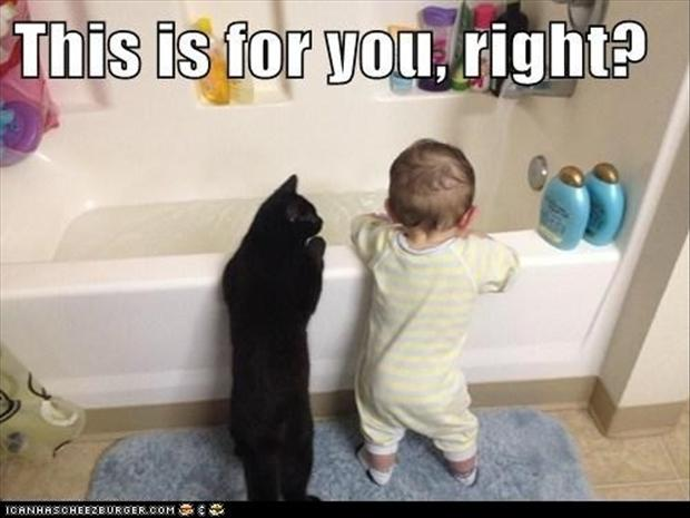 a-cat-taking-a-bath-funny-pictures