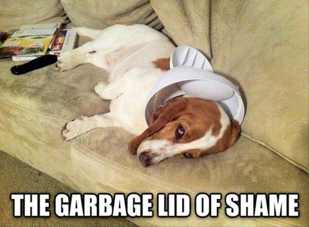 the-garbage-lid-of-shame