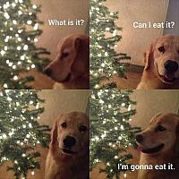 dog-destroys-christmas-tree-funny-pictures1