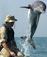 misc-dolphin-jumping-out-of-the-water-with-a-test-camera-on-his-fin