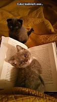 the-cutest-bookmark-ever