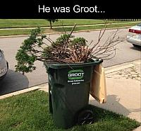 when-I-was-groot