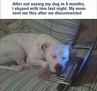 skyped-my-dog-until-the-last-one-comes-home