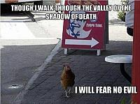 funny-chickens1
