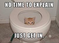 a-cat-in-the-toilet-no-time-to-explain-just-get-in