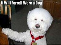 a-will-ferral-dog-funny-pictures