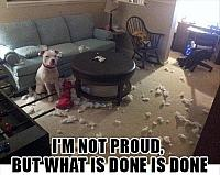 dog-makes-a-mess-funny-pictures